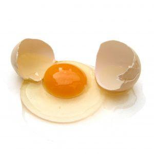 egg[1]