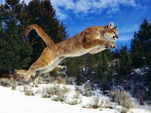 52627-wild-nature-wildlife-animals-hunting[1]